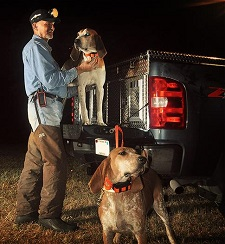 coon-dogs-ready-to-hunt