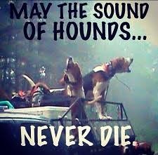 sounds-of-hounds